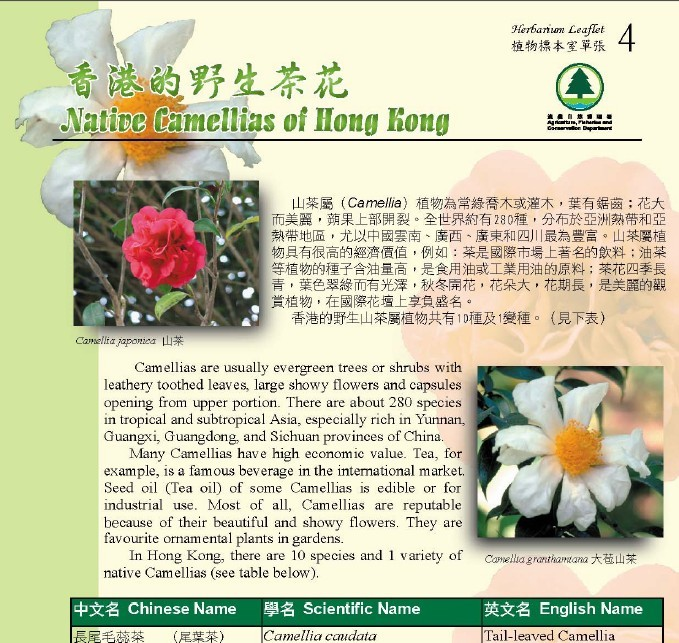 4. Native Camellias of Hong Kong (Bilingual)